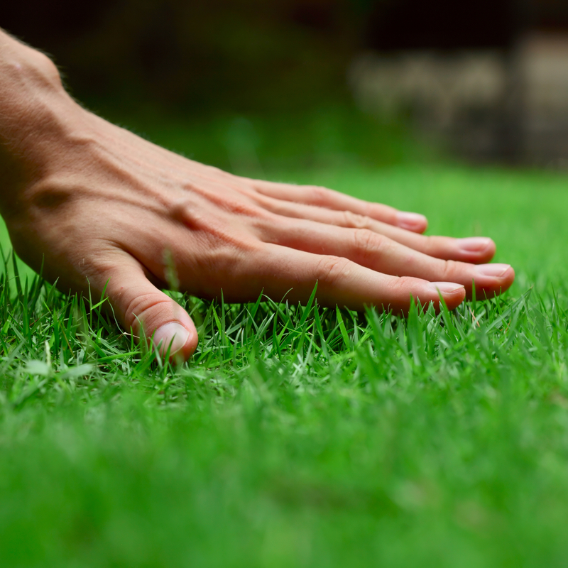 Spring lawn care services from Ferta-Lawn help your lawn start its year as healthy as possible.