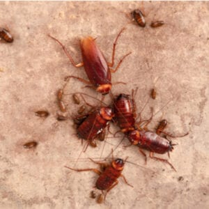group of cockroaches on floor